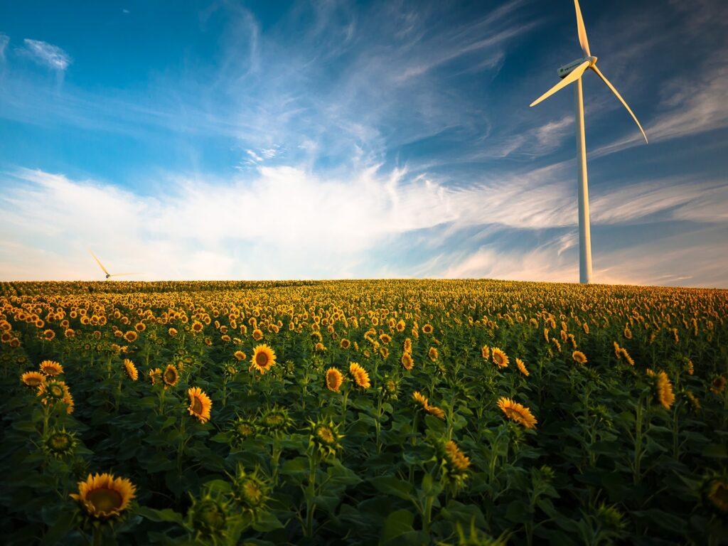 טורבינת רוח בשדה פרחים